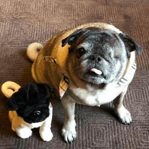 mascots pug custom bulk plush
